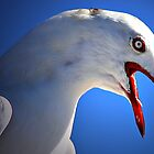 Angry Seagull by Wolf Sverak