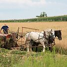 Harvest Time by jules572