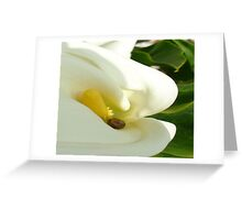 Beautiful Calla Flower On Green Natural Background  Greeting Card