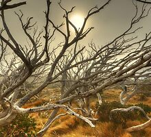 Burnt snowgum forest, The Bluff by Kevin McGennan