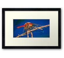 Scarlet Dragonfly Framed Print