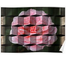 Rose in 3-Dimension Cubed Poster