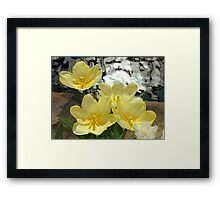 Spring Flowers and Shimmering Water Framed Print