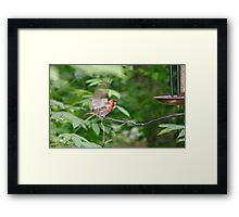 Flapping Wings Framed Print