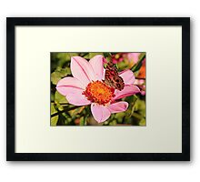 Pink Flower and Monarch Butterfly Framed Print