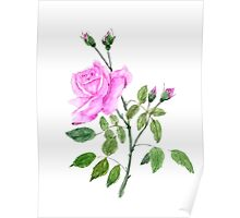 pink rose watercolor painting  Poster