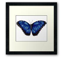 Morpho Butterfly Framed Print