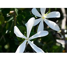 long white flowers Photographic Print