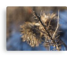 Closeup of a brown thistle stem in winter macro Canvas Print