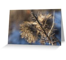 Closeup of a brown thistle stem in winter macro Greeting Card