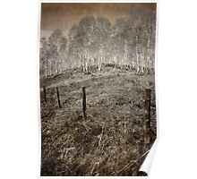 Alder trees, Royal Deeside Poster