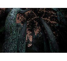 Round Trees at Night Photographic Print