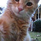 Cute Kitty by L.D. Franklin