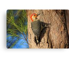 Red-headed Beauty    Canvas Print