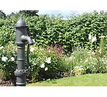 Water Pump & Well Garden Photographic Print