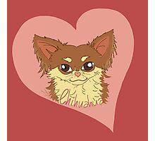 Chihuahua Love Photographic Print