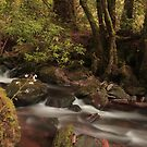 A river runs through it  by miradorpictures