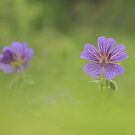 In the meadow by miradorpictures