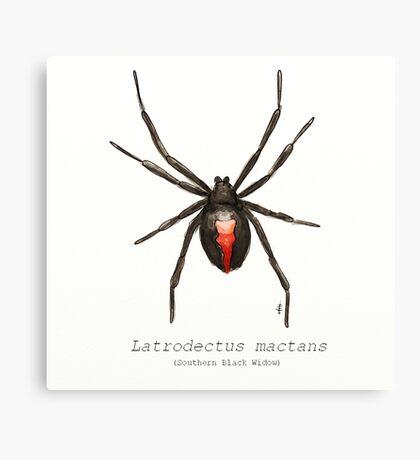 Latrodectus mactans (southern black widow) Canvas Print