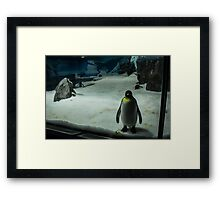 Penguin Portrait Framed Print