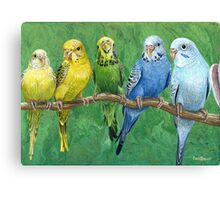 "Singing Budgies ""Budgie Band"" Acrylic Painting Canvas Print"
