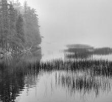Still Pond by njordphoto