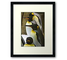 Tuxedo Crowd - King Penguins Framed Print