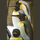 Tuxedo Crowd - King Penguins by Yannik Hay
