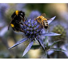 Bumble Bee & The Wasp Photographic Print