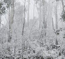 Snow laden by EskiMojo