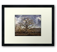 landscape large tree with cloudy sky Framed Print