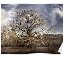landscape large tree with cloudy sky Poster
