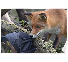 Hey mister fox...thats mine! Poster