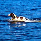 Doggy Paddle by Andy Thomson Photography Art