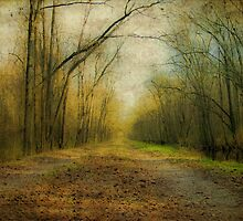 Winter Path by Susan Werby