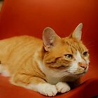 Charlie the marmalade cat by Ladymoose