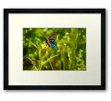Black Swallowtail No. 2 painterly Framed Print