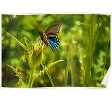 Black Swallowtail No. 2 painterly Poster