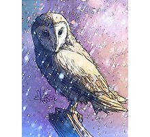 Owl - Showers Photographic Print