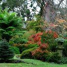 Wildenstein - Mt Wilson NSW by Bev Woodman