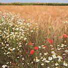 Wheatfield of flowers by zumi