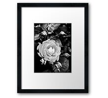 Dark Rose Framed Print