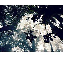 Misty Canopy Photographic Print