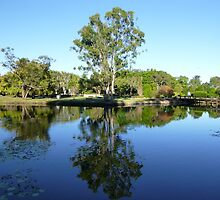 Gumtree Reflection by FangFeatures