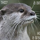 Otter birthday card by ellismorleyphto