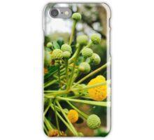 Fruit & Spice iPhone Case/Skin