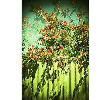 floral fence Photographic Print