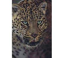 After Dark all cats are leopards Photographic Print