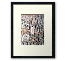 Catapillar On A Gum Tree Framed Print