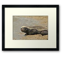 Honey Badger -  Framed Print
